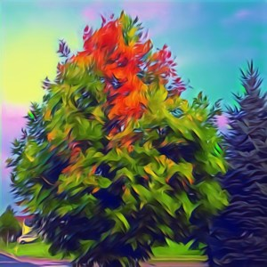 Burning Maple [15 Words or Less]