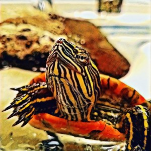 Voldetort the Turtle [15 Words or Less]
