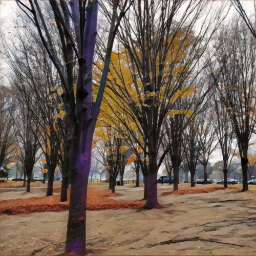 autumn tress in washington dc