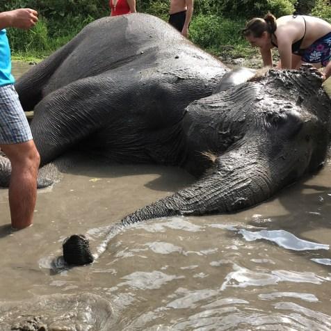 elephantjungle9
