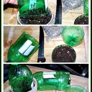 Make your own Mini Greenhouses – DIY for Seedlings
