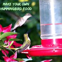 Make your Own Hummingbird Food Recipe #DIY #Recipe