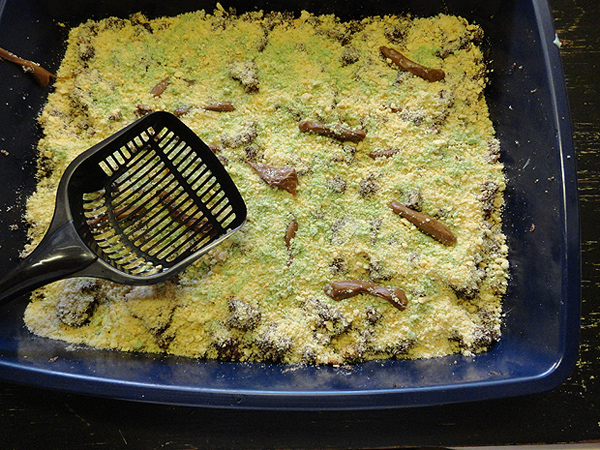 Kitty Litter Cake 21 Halloween Party Treats www.lauraslittlehousetips.com