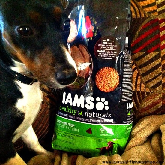 Zoey & Mom's Day In with IAMS #FurryFoodie