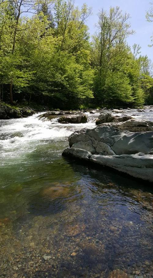 5 Top Picnic and Scenic Spots in the Smokies-Greenbrier