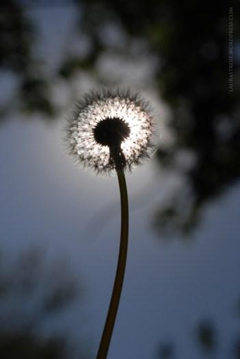 The Sun Inside