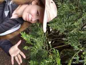 Laura releasing branch of yew.