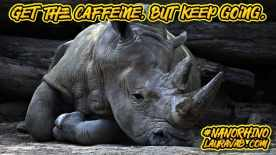 Collapsed rhino. Get the caffeine, but keep going.