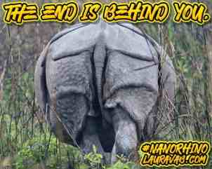 Rhino's posterior. The end is behind you!
