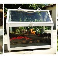 DIY : terrarium !