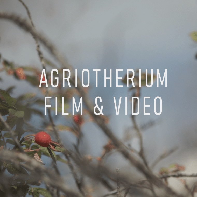 Rosehip_videography