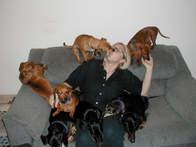 With the Dachshunds of Dachshund Rescue Web Page; late 1990s