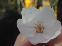 Gorgeous blossoms