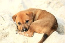 281px-puppy_on_halong_bay
