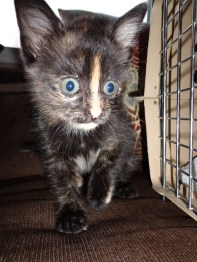 Cabin fevered!!!! (This is Bonkers, one of the pet rescue kittens)