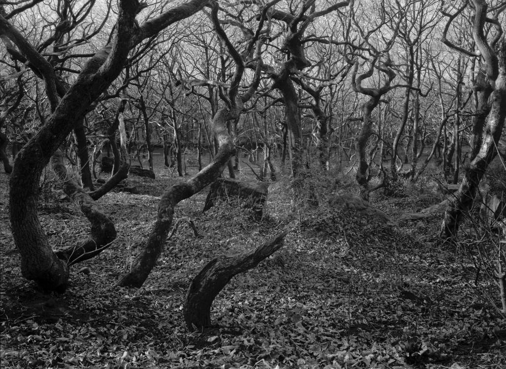 Copley Woods