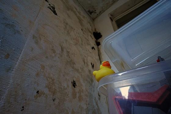 A joke duck
