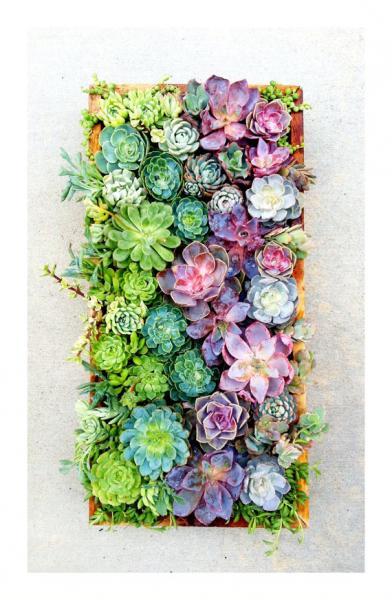 ombre succulents