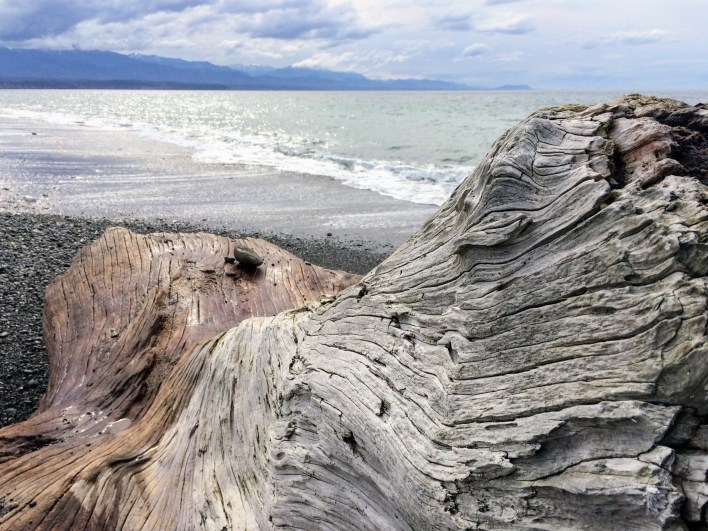 Driftwood on Dungeness Spit