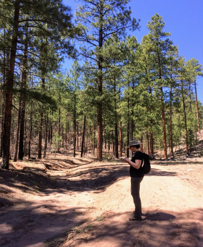 Looking for the Paliza Canyon Goblin Colony trail, Jemez National Forest