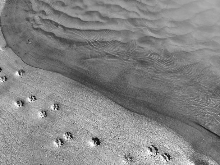 Dog tracks on a small beach at the confluence.