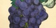 story-wine-prize-497x250