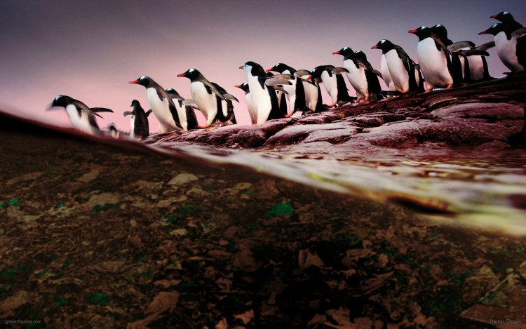A group of penguins march into a dirty ocean under a polluted sky.
