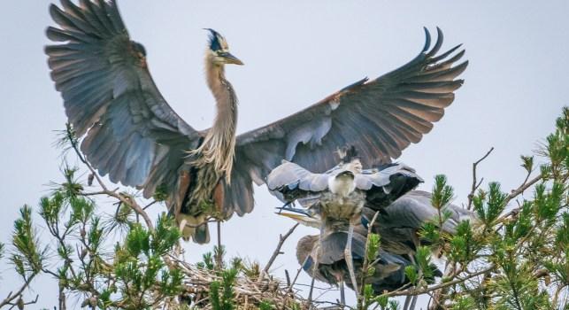 1 Year of Wildlife Photography