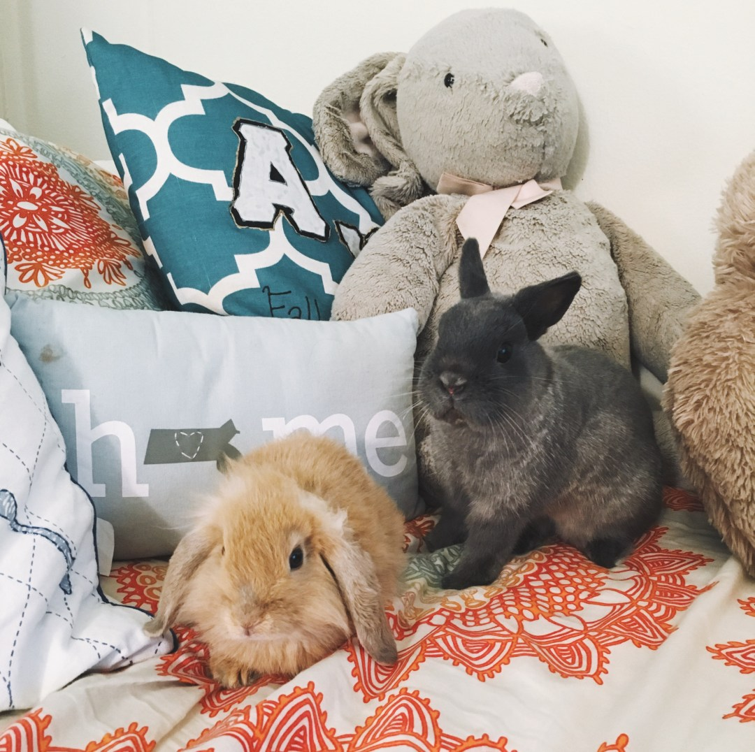 Emotional support animals, rabbits, bunnies // http://laurensjourney.com
