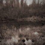 Swamp Photograph