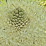 Beargrass Zoom
