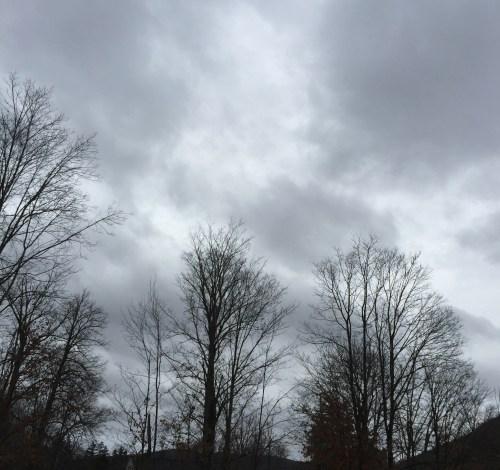 """rox-dark trees5""""_0593"""