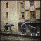 Monkeys at the Tower of London