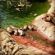 Otters - my favourites