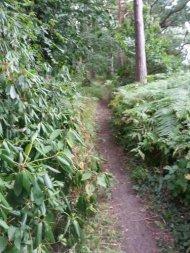 Woodland run