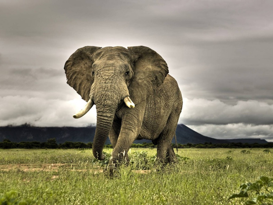 Wild Life High Resolution Wallpapers