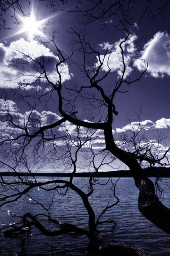 beautiful Nature silhoutte photography