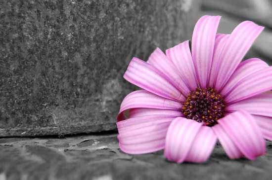 color splash effect photoshop