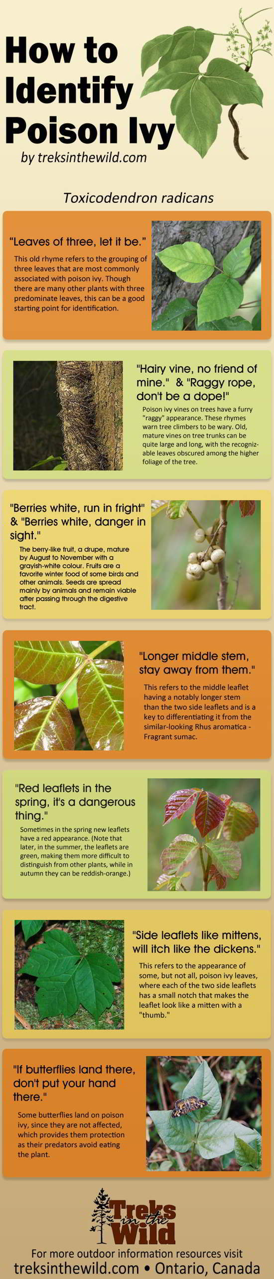 01 How to Identify Poison Ivy [infographic]
