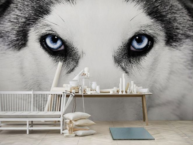 wolf blue eyes mural wall paper