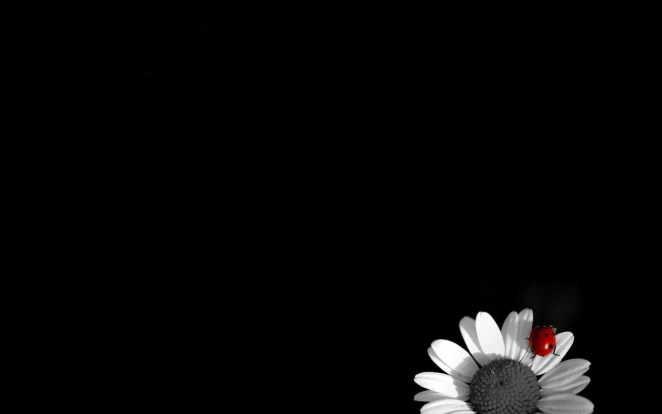 Black and White Wallpapers for Desktop28