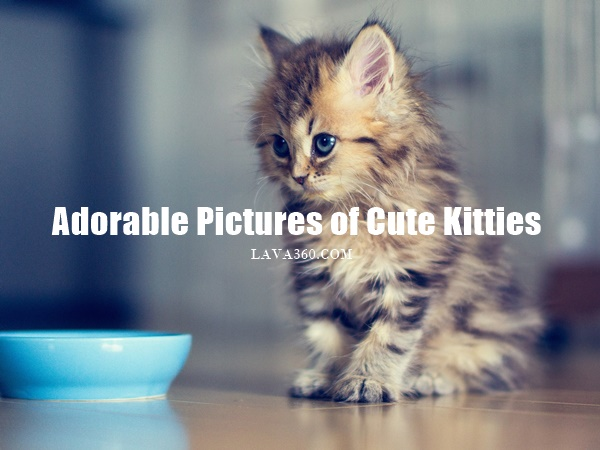 Pictures of Cute Kittes (1)