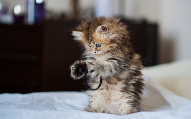 Pictures of Cute Kittes (3)