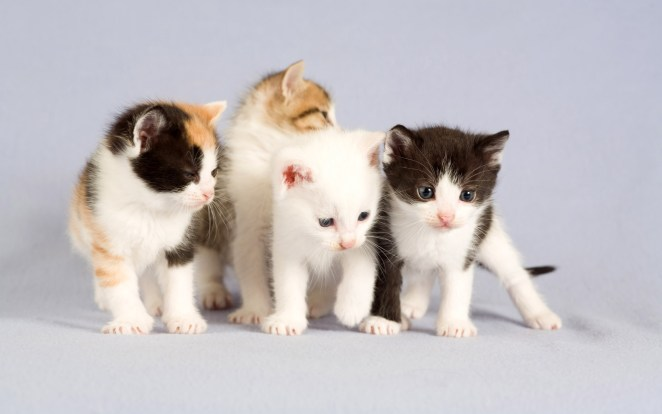Pictures of Cute Kittes (8)