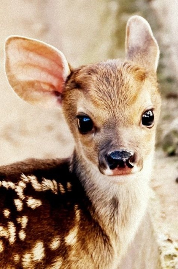 cute baby animal pictures (25)