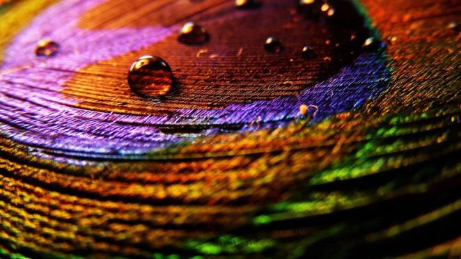 30-stunning-raindrop-peacock-feather-works-15