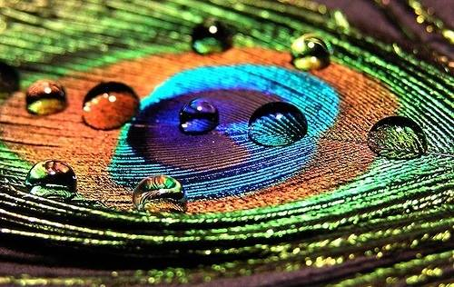 30-stunning-raindrop-peacock-feather-works-21