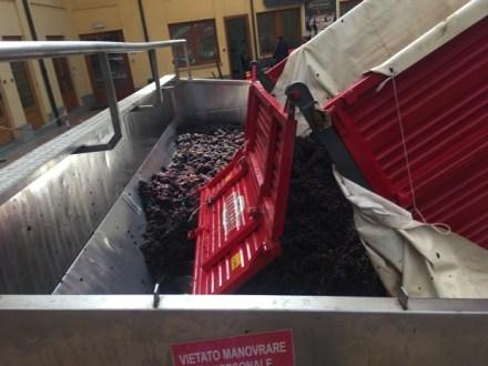 バローロも収穫中!</br>発酵中の赤ワイン樽の中をCHECK!