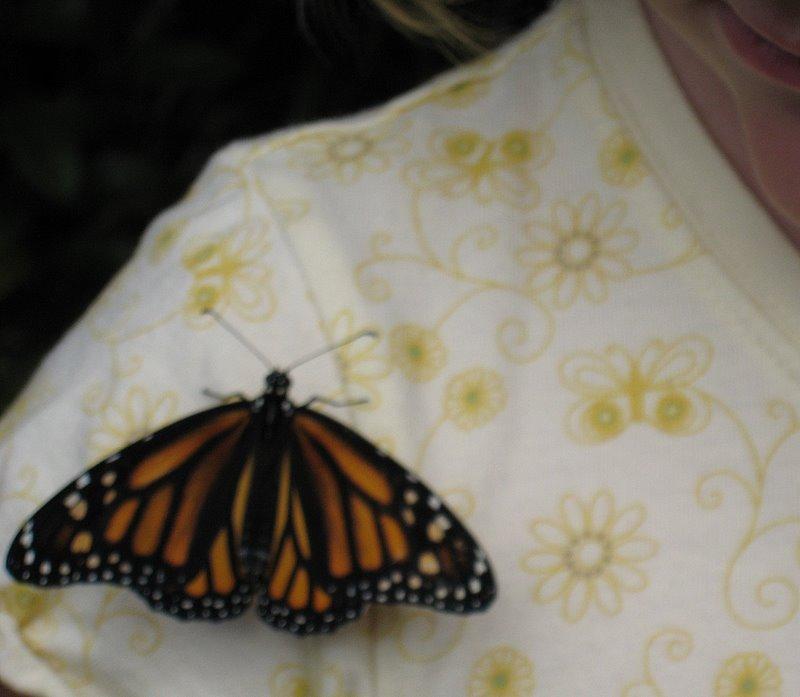 Kid2 & Monarch Butterfly