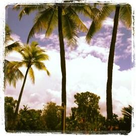 View in Port Douglas